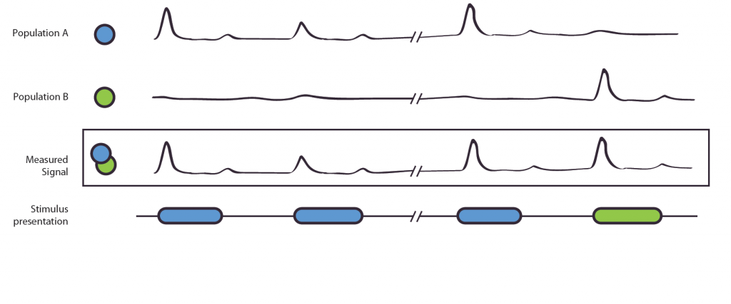 Figure 1. The Adaptation Effect. The measured signal, e.g. local field potential or EEG-signal, results from the combined signal of entangled neuronal populations/networks A and B. Due to poor spatial resolution and the entanglement, it is not possible to measure the populations alone. Population A is selectively active to the blue stimulus, B to the green. If shown two blue stimuli, population A shows a reduced activation, this is also shown in the measured signal. In the second case, population A reacts to the blue stimulus, population B to the green stimulus. As their original, not observable activity is independent, no adaptation effect occurs. The measured signal does not show a reduction of strength.